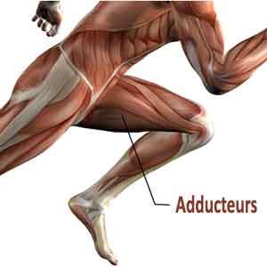 Adducteurs | Exercices de Musculation et étirements