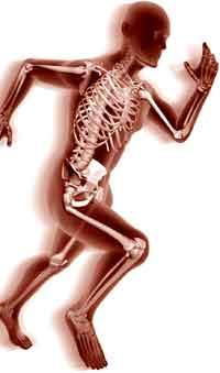 muscle du corps humain pdf