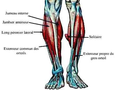 Cheville exercice de musculation pr ventive d 39 une entorse for Exterieur triceps