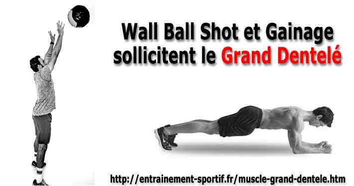 wall ball shot et gainage sollicitent les muscles grands dentelés