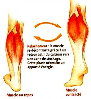 crampes douleurs musculaires
