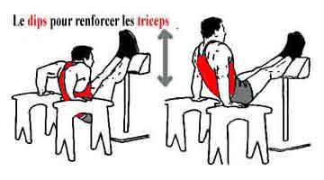 Musculation des bras exercices pour muscler biceps et for Programme dessin maison