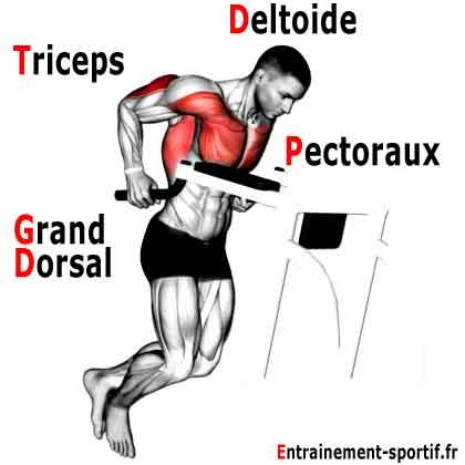 Le Dips Pour Muscler Triceps Pectoraux Et Deltoides