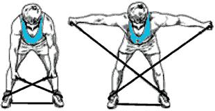 Musculation du dos  Exercices et matériel efficaces pour le muscler e8dfe0080bf