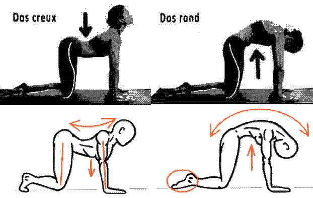 Mal de Dos - 21 Exercices contre les Douleurs Dorso-Lombaires