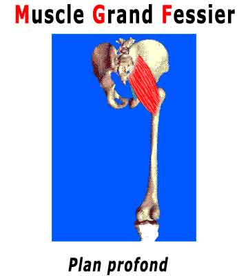muscler fesses