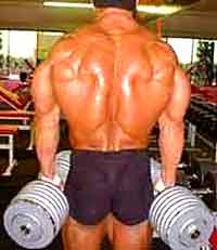 muscles lombaires musculation et exercices d 39 tirement. Black Bedroom Furniture Sets. Home Design Ideas