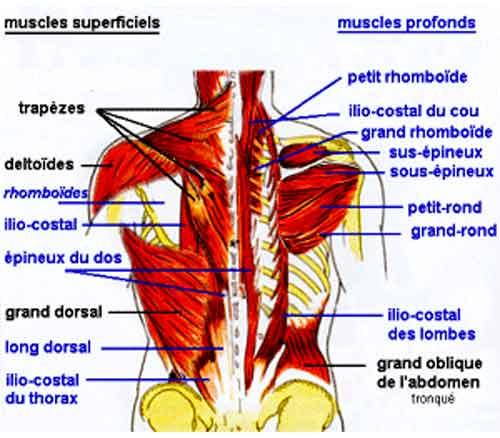 Les piqûres de la douleur avec le dos