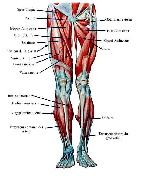 Test sargent pour la d tente verticale et l 39 explosivit musculaire - Se couper les veines sans douleur ...