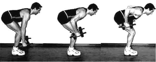 Rowing barre ou halt re en musculation pour dos et trap zes - Exercice de musculation avec banc ...