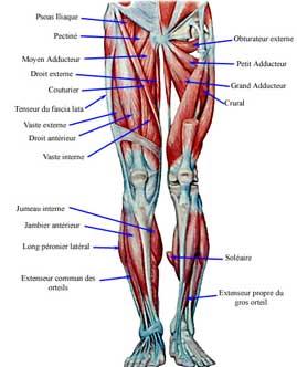 Programme de musculation pour la puissance pictures for Programme de musculation