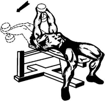 Natation programme de musculation pour le crawl - Exercice de musculation avec banc ...