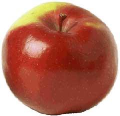 Manger des pommes est idéal pour maigrir et être forme