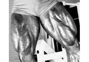 muscle quadriceps